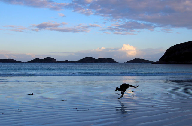 """Lucky Bay: Beautiful Lucky Bay in Esperance, Western Australia, is home to many kangaroos. Not only is the turquoise water and white sand a sight to see but at sunset the kangaroos bounce their way across the sand looking for dinner"". (Photo and comment by Mandy Wilson/National Geographic Photo Contest via The Atlantic)"