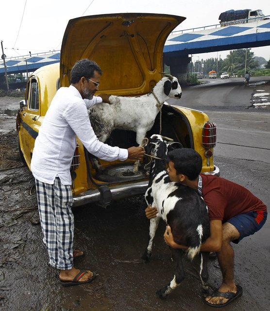 A father and his son load a pair of goats into the boot of a taxi after purchasing them from a livestock market on the eve of the Eid al-Adha festival in Kolkata, India, September 24, 2015. (Photo by Rupak De Chowdhuri/Reuters)