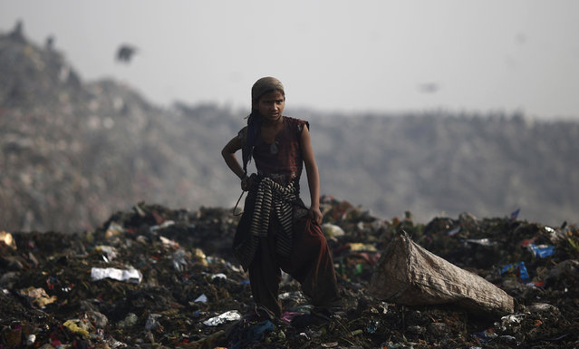 A girl collects recyclable material at a garbage dump in New Delhi February 2, 2014. (Photo by Adnan Abidi/Reuters)