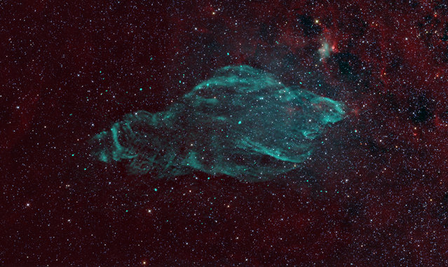A watery-looking nebula in deep space is being renamed after the sea creature it strongly resembles: a manatee. Manatees are huge mammals that average about 10 feet (3 meters) long and tend to weigh over 1,000 pounds (450 kilograms). These gentle giants propel themselves with flippers, and spend up to eight hours a day munching on sea plants. The photo shows the manatee nebula seemingly mimicking a trademark pose of the animal, which is often seen floating on its back, with flippers crossed over belly. The nebula W50 is the leftovers from a star that died in a supernova explosion about 20,000 years ago. Before it died, the giant star puffed out its outer gaseous layers, which now swirl in green-and-blue clouds around the dead hulk of the star, which has collapsed into a black hole. (Photo by National Radio Astronomy Observatory)