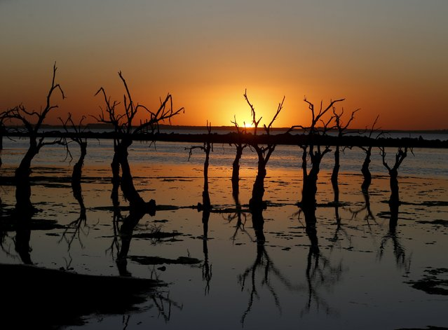 Deadwood is seen at sunset in Epecuen Village, November 6, 2015. (Photo by Enrique Marcarian/Reuters)