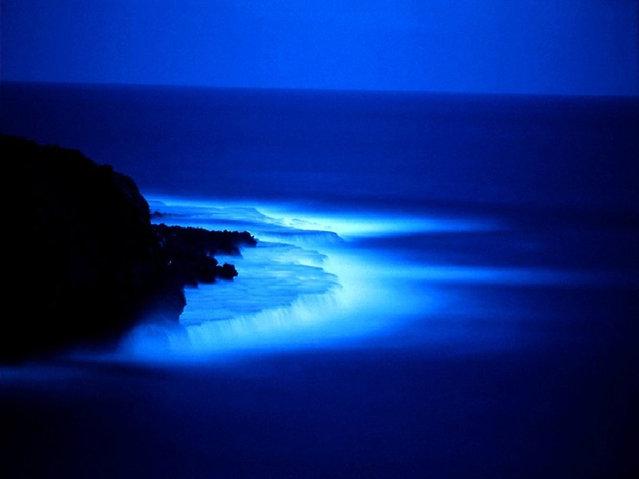 Glowing Bioluminescent Plankton