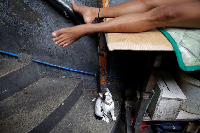 A cat is tied to the leg of a sleeping inmate inside Quezon City Jail in Manila, Philippines October 19, 2016. (Photo by Damir Sagolj/Reuters)