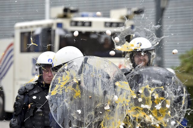 Policemen get hit by eggs as farmers and dairy farmers from all over Europe take part in a demonstration outside a European Union farm ministers' emergency meeting at the EU Council headquarters in Brussels, Belgium September 7, 2015. (Photo by Eric Vidal/Reuters)