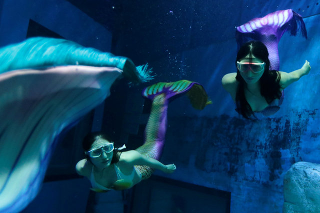 Mermaid performers practice in an aquarium after graduating from a mermaid workshop in Guangzhou, Guangdong Province, China December 16, 2016. (Photo by Tyrone Siu/Reuters)