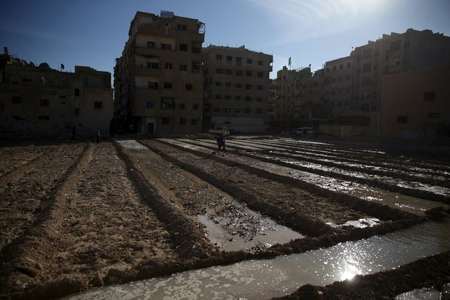 A man prepares land to plant wheat in Ain Tarma, in the eastern Damascus suburb of Ghouta, Syria February 4, 2016. (Photo by Bassam Khabieh/Reuters)