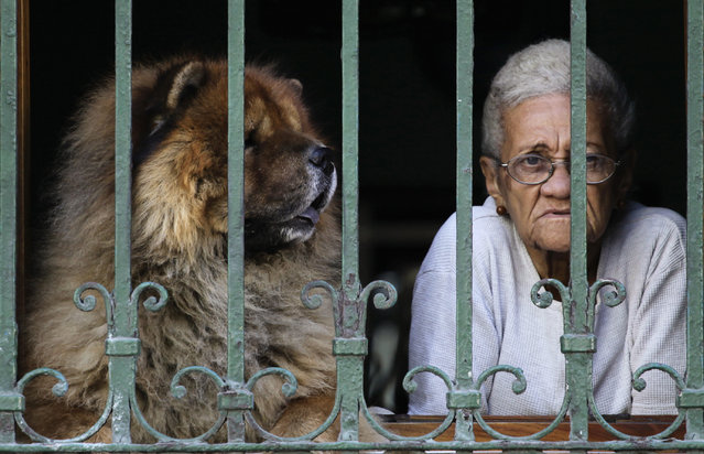A woman and her dog look out of a window in Havana , January 2013. (Photo by Desmond Boylan/Reuters)