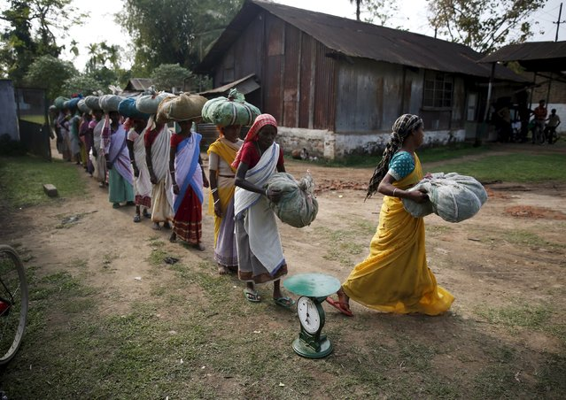 Tea garden workers arrive to weigh tea leaves after plucking them from a tea estate in Jorhat in Assam, India, April 20, 2015. Unrest is brewing among Assam's so-called Tea Tribes as changing weather patterns upset the economics of the industry. Scientists say climate change is to blame for uneven rainfall that is cutting yields and lifting costs for tea firms. (Photo by Ahmad Masood/Reuters)