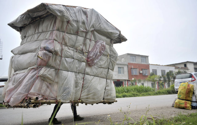 "Liu Lingchao, 38, carries his makeshift dwelling as he walks along a road in Shapu township of Liuzhou, Guangxi Zhuang autonomous region, China May 21, 2013. Five years ago, Liu decided to walk back to his hometown Rongan county in Guangxi from Shenzhen, where he once worked as a migrant worker. With bamboo, plastic bags and bed sheets, Liu made himself a 1.5-metre-wide, 2-metre-high, ""portable room"" weighing about 60 kg (132 lb), to carry with him as he walks an average of 20 kilometers everyday. (Photo by Reuters/Stringer)"