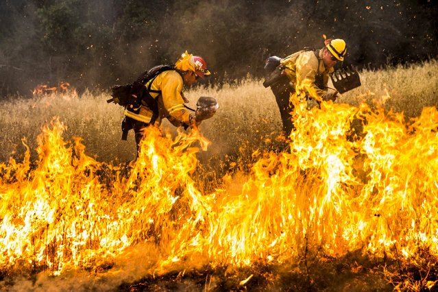 Firefighters work to dig a fire line on the Rocky Fire in Lake County, California July 30, 2015. (Photo by Max Whittaker/Reuters)