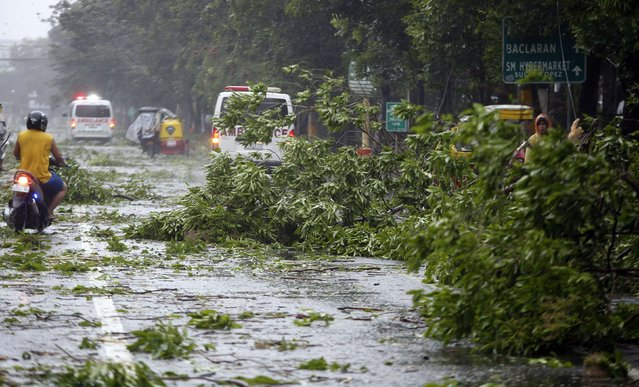 Vehicle traverse a road littered by debris from fallen trees brought by strong winds as Typhoon Rammasun (locally named Glenda) hit Paranaque, Metro Manila, July 16, 2014. (Photo by Erik De Castro/Reuters)