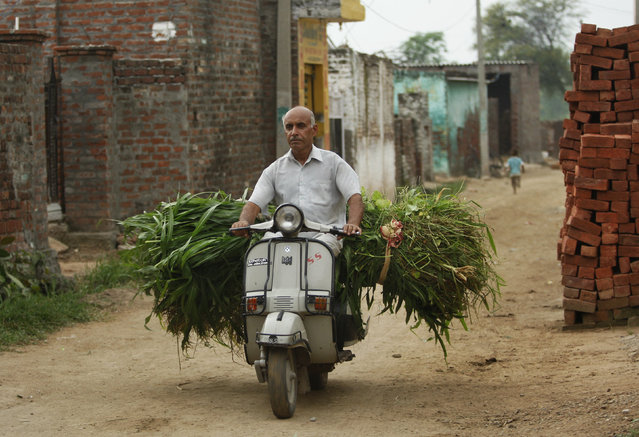 In this Thursday August 20, 2015, photo, an Indian villager carries grass for cattle on a scooter near India Pakistan international border at Ranbir Singh Pura 36 kilometers (22.5 miles) from Jammu, India. (Photo by Channi Anand/AP Photo)