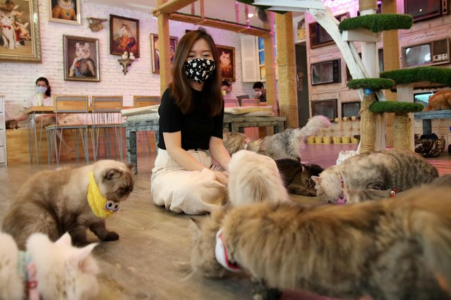 Customers play with cats to find comfort at the Caturday Cat cafe after the government started opening some restaurants outside shopping malls, parks and barbershops, during the coronavirus disease (COVID-19) outbreak in Bangkok, Thailand on May 7, 2020. (Photo by Juarawee Kittisilpa/Reuters)