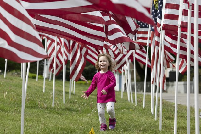 Hazel Roberts walks in a field of flags ahead of Memorial Day, Saturday, May 23, 2020, in Cohasset, Mass. (Photo by Michael Dwyer/AP Photo)