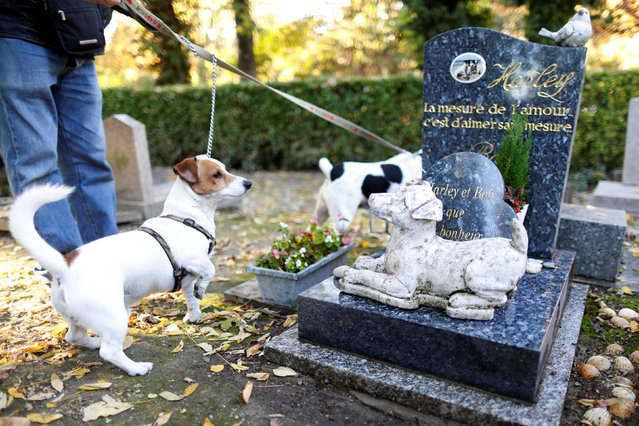 "Dogs of a visitor pass by the grave of ""Harley"" at the cimetiere des chiens (Cemetery of dogs) ahead of the commemoration of All Saints Day at the Montmartre cemetery in Asnieres, northern Paris, France, October 30, 2016. (Photo by Charles Platiau/Reuters)"