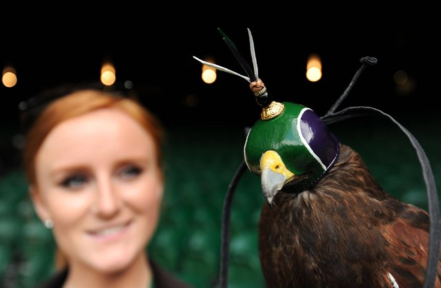 Rufus the Hawk wears his new hood in Wimbledon colours while on patrol on Centre Court with his handler Imogen Davies during day four of the Wimbledon Championships at The All England Lawn Tennis and Croquet Club, Wimbledon, on June 27, 2013. (Photo by Andrew Matthews/PA Wire)