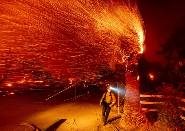 A firefighter passes a burning tree while battling the Bond Fire in the Silverado community of Orange County, Calif., on Thursday, December 3, 2020. (Photo by Noah Berger/AP Photo)