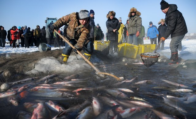 People participate in a winter fishing event in Changling Lake in Harbin, Heilongjiang province, December 27, 2015. (Photo by Reuters/China Daily)
