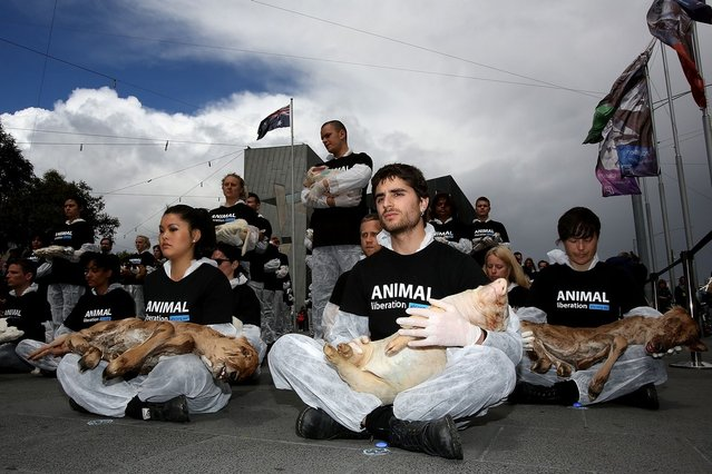 """Animal Liberation Victoria activists hold dead animals at Federation Square on October 1, 2013 in Melbourne, Australia. Over 200 activists gathered with the bodies of deceased animals to publicly grieve their deaths. Animal Liberation Victoria is against the treatment of animals as """"property"""" an promotes a vegan lifestyle.  (Photo by Graham Denholm/Getty Images)"""