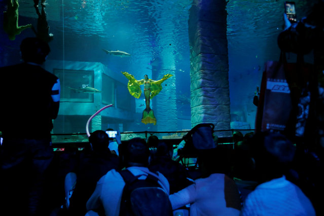 A performer practices her mermaid swim in an aquarium after graduating from a mermaid workshop in Guangzhou, Guangdong Province, China December 16, 2016. (Photo by Tyrone Siu/Reuters)