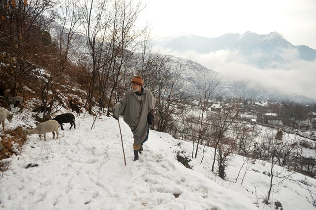 A shepherd tends to his flock after a snowfall on the outskirts of Srinagar on January 5, 2017. The sub-zero temperatures has frozen many water bodies in Kashmir and even drinking water taps have frozen at some places. (Photo by Tauseef Mustafa/AFP Photo)