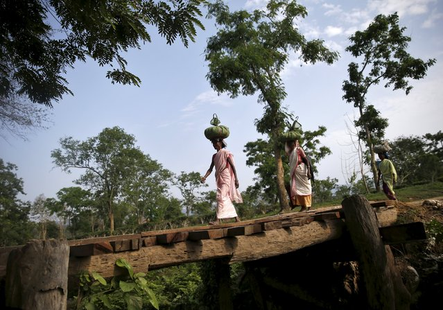 Tea garden workers carrying tea leaves over their heads after plucking them from a tea estate, walk at Jorhat in Assam, India, April 20, 2015. (Photo by Ahmad Masood/Reuters)
