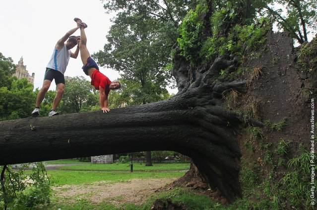 Claus Espinosa (L) and Miguel Aguado from Spain clown around on a downed tree in Central Park after Hurricane Irene dumped more than six inches of rain