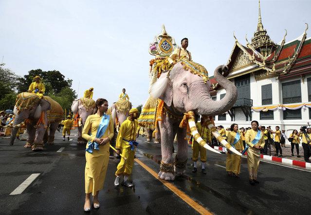 Elephants are paraded outside the Grand Palace in honor of Thailand's King Maha Vajiralongkorn following his coronation ceremony in Bangkok, Thailand, Tuesday, May 7, 2019. (Photoby Rapeephat Sitichailapa/AP Photo)