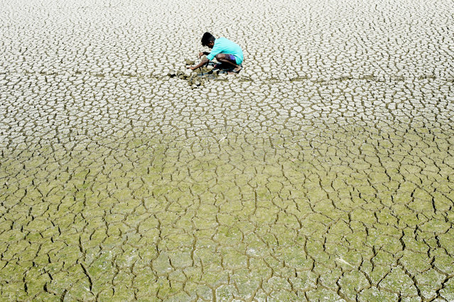 An Indian youth scouts around for mud crabs and snakehead fishes as he walks on the parched bed of Chembarambakkam lake on the outskirts of Chennai on May 21, 2019. Water levels in the four main reservoirs in Chennai has fallen to one of its lowest levels in 70 years, according to Indian media reports, with the current levels amounting to only 1.3 percent of full capacity. (Photo by Arun Sankar/AFP Photo)