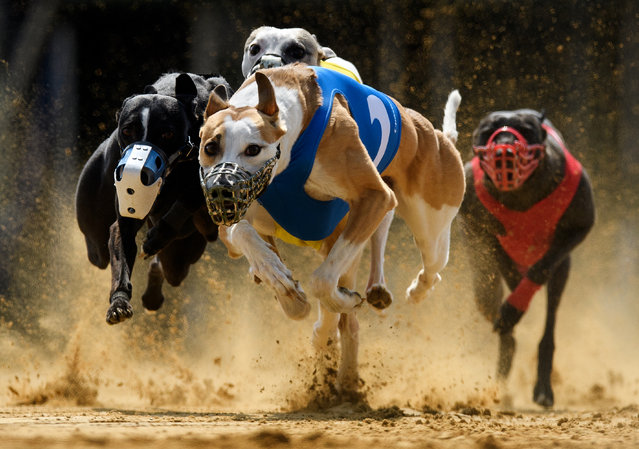 (L-R) Gladiator Ramanus and Chasing Lane's Firing Aces fight for the  lead during the 22th race of the Solitude-Race 2016 on April 10, 2016 in Sachsenheim, Germany.  (Photo by Matthias Hangst/Bongarts/Getty Images)