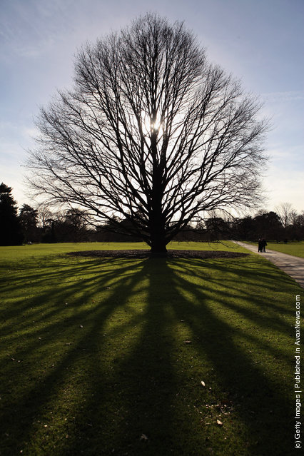 A leafless tree casts a shadow in the Royal Botanical Gardens at Kew on February