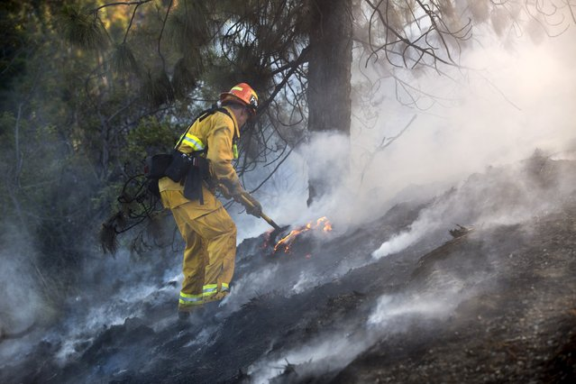 A firefighter works to put out a brush fire burning on the eastbound Ventura (134) Freeway in Los Angeles, California August 7, 2015. The brush fire spread out in small spots over a 2-mile stretch on both sides of the freeway, according to the Fire Department. (Photo by Mario Anzuoni/Reuters)