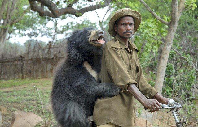 Sloth Bear Family Like A Dog