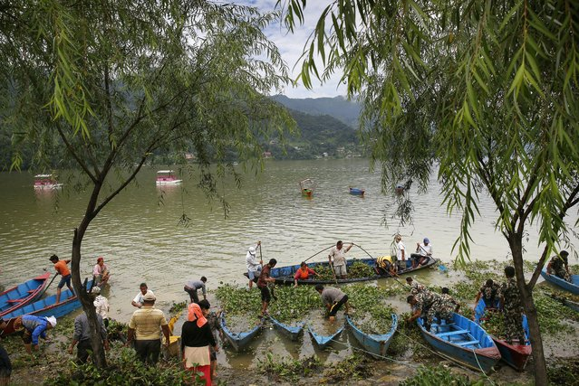 Local people participate in a Water Hyacinth cleaning program at Phewa Lake in Pokhara, Nepal, 16 July 2017. (Photo by Narendra Shrestha/EPA/EFE)
