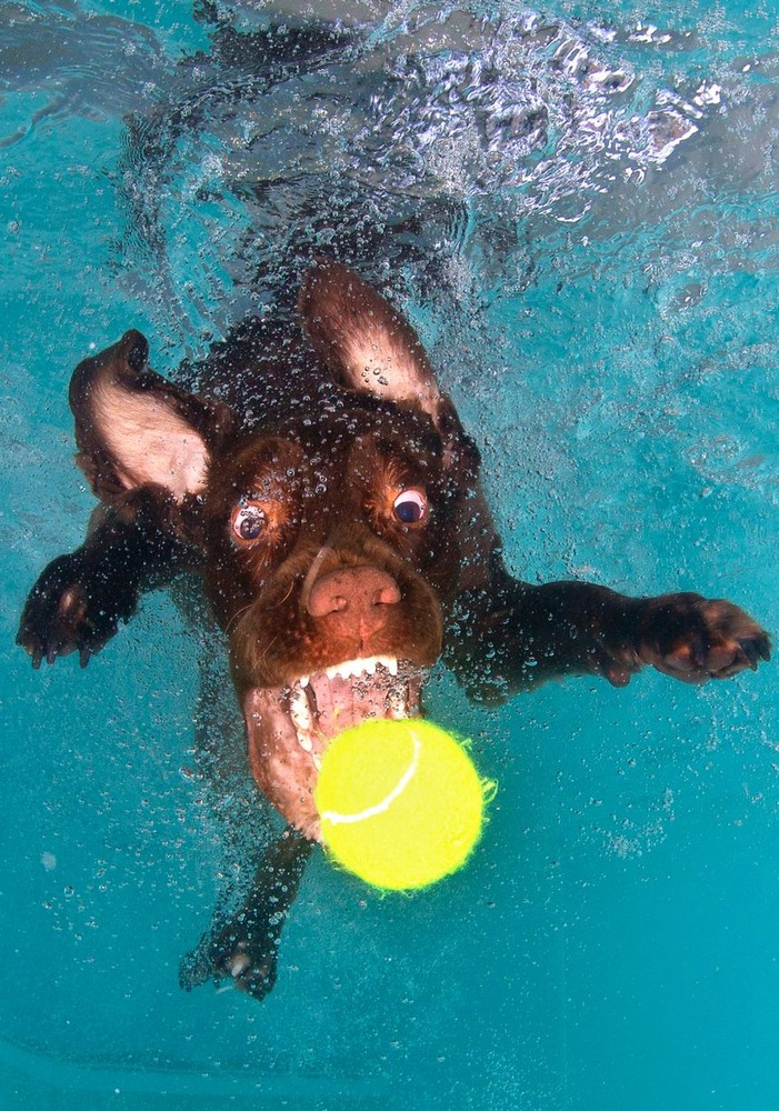 Dogs Diving for Tennis Balls