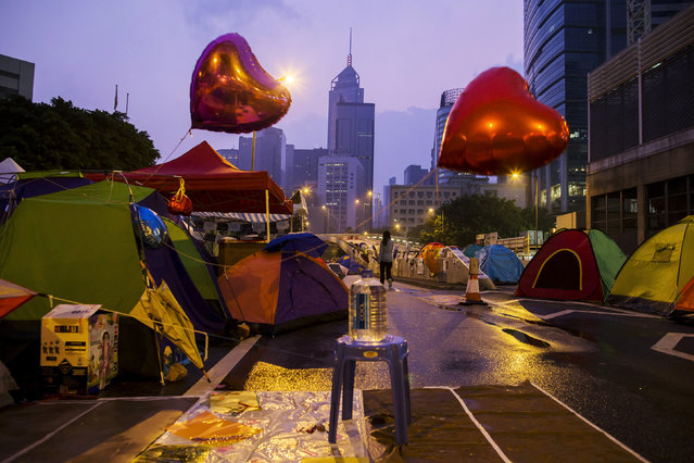 An Occupy Central protester walks past tents before sunrise on a main road leading to the financial Central district in Hong Kong October 16, 2014. Hong Kong police used pepper spray early on Thursday to stop pro-democracy protesters from blocking a major road near the office of the city's embattled leader amid public anger over the police beating of a protester a day earlier. (Photo by Tyrone Siu/Reuters)