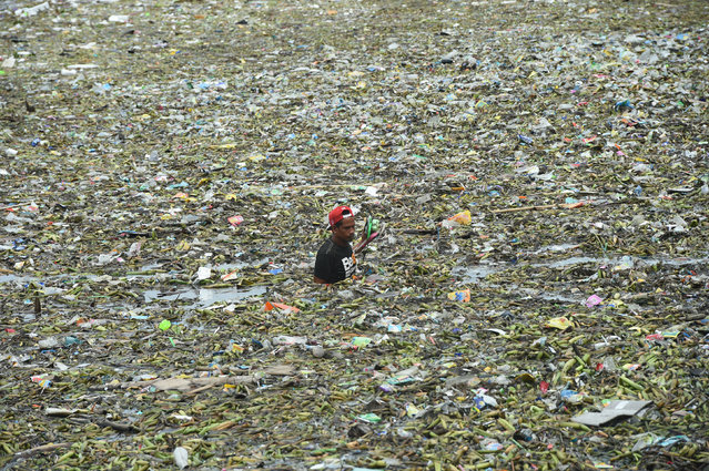 A man collects recyclable materials amongst the floating garbage at Manila baywalk, washed ashore after tropical storm Nida passed through northern Philippines on August 1, 2016. (Photo by Ted Aljibe/AFP Photo)