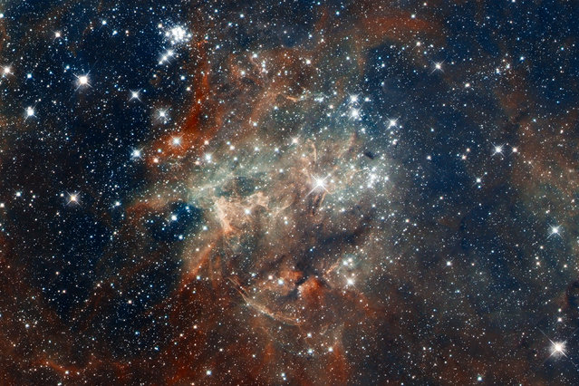 Star cluster NGC 2060, a loose collection of stars in 30 Doradus, located in the heart of the Tarantula Nebula 170,000 light-years away in the Large Magellanic Cloud, a small, satellite galaxy of our Milky Way. (Photo by Reuters/NASA/European Southern Observatory/Space Telescope Science Institute/Hubble Space Telescope)