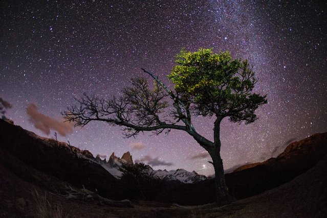 """Midnight Tree"". I hiked several hours through the night in Patagonia to find a tree I had seen a few days earlier and photograph it with the night sky. (Photo and caption by Max Seigal/National Geographic Traveler Photo Contest)"