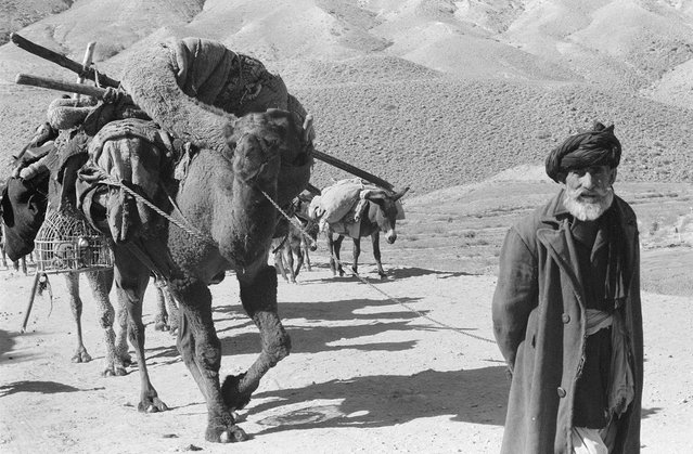 Afghan man leading laden camels and donkeys through an arid, rocky landscape, in November, 1959. (Photo by Robert P. Martin/LOC via The Atlantic)