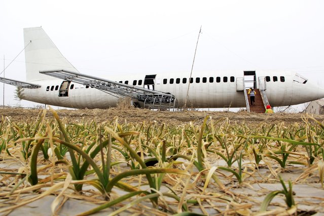 """Villagers visit a home-made Boeing 737 look-alike at a crop field in Neihuang county, Henan province, December 27, 2015. Farmer Wang Lanqun spent a year making the 35-meter-long plane-shaped installation. With some further decoration, the """"plane"""" will be later transformed into a restaurant, according to local media. (Photo by Reuters/China Daily)"""