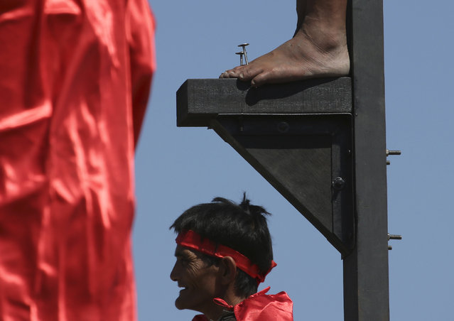 The feet of a Filipino penitent is nailed to a wooden cross during Good Friday rituals on April 3, 2015 at Cutud, Pampanga province, northern Philippines. Several Filipino devotees had themselves nailed to crosses Friday to remember Jesus Christ's suffering and death, an annual rite frowned upon by church leaders in this predominantly Roman Catholic country. (Photo by Aaron Favila/AP Photo)
