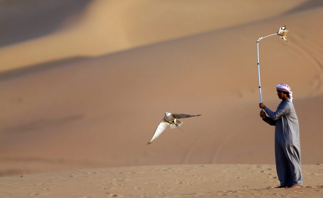 An Emirati falconer moves a lure to attract the falcon at the Liwa desert, 220 kms west of Abu Dhabi, on the sidelines of the Mazayin Dhafra Camel Festival on December 21, 2013. (Photo by Karim Sahib/AFP Photo)