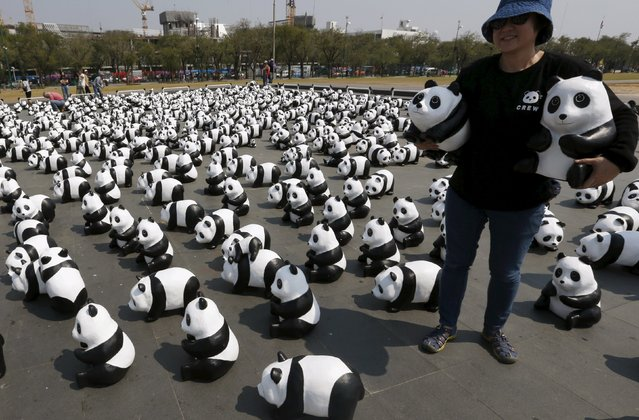 A volunteer arrange panda sculptures ahead of an exhibition by French artist Paulo Grangeon in Bangkok, Thailand, March 4, 2016. A cute flash mob of 1,600 papier-mâché pandas has occupied Sanam Luang this afternoon, brightening up the historic ground beside Wat Phra Kaew. Sponsored by wildlife charity WWF, the one-of-a-kind 1,600 panda paper sculptures have been exhibited across the globe since 2008 to highlight the importance of wildlife conservation and sustainability. (Photo by Chaiwat Subprasom/Reuters)