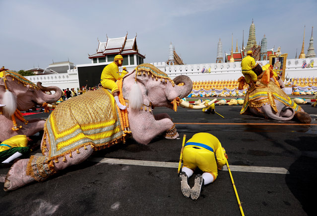 Elephants from Ayutthaya camp prostrate as part of a procession near the Grand Palace to celebrate Thai King Maha Vajiralongkorn's coronation, in Bangkok, Thailand on May 7, 2019. (Photo by Soe Zeya Tun/Reuters)