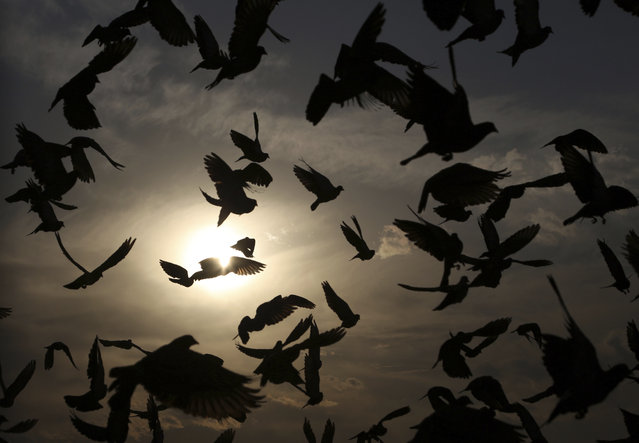 Pigeons fly outside the Karti Sakhi shrine at sunset in Kabul, Afghanistan, Monday, November 4, 2019. (Photo by Rahmat Gul/AP Photo)