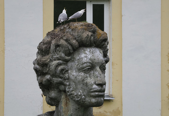 Seagulls sit on the head of a sculpture of Russian poet Aleksander Pushkin on the day of his 221st birthday in Naziya village, 80 km (50 miles) east of St. Petersburg, Russia, Saturday, June 6, 2020. (Photo by Dmitri Lovetsky/AP Photo)