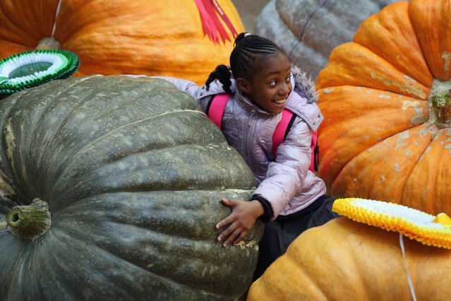 Amaryah Amos, 7, sits amongst the giant Pumpkins at the Royal Horticultural Harvest Festival Show, October 7, 2014, in London. Growers from across the UK come together for the show to exhibit their seasonable bounty in the annual fruit and vegetable competition. (Photo by Dan Kitwood/Getty Images)