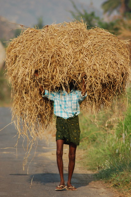 """""""Redefining «Hard Work»"""". I rented a moped in Hampi, India in 2009 in order to explore the countryside and smaller villages. On an early morning ride, I saw this farmer carrying hay. Photo location: Hampi, India. (Photo and caption by Melissa Curry/National Geographic Photo Contest)"""