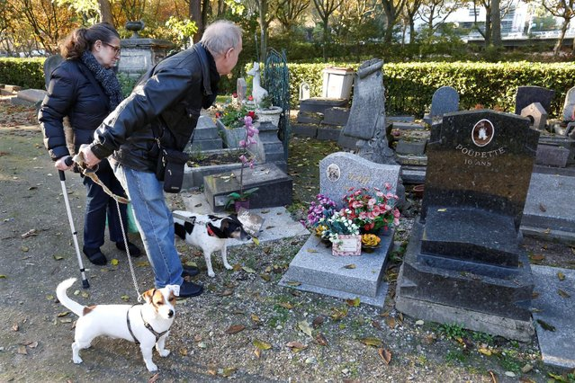 Visitors look at graves at the cimetiere des chiens (Cemetery of dogs) ahead of the commemoration of All Saints Day at the Montmartre cemetery in Asnieres, northern Paris, France, October 30, 2016. (Photo by Charles Platiau/Reuters)